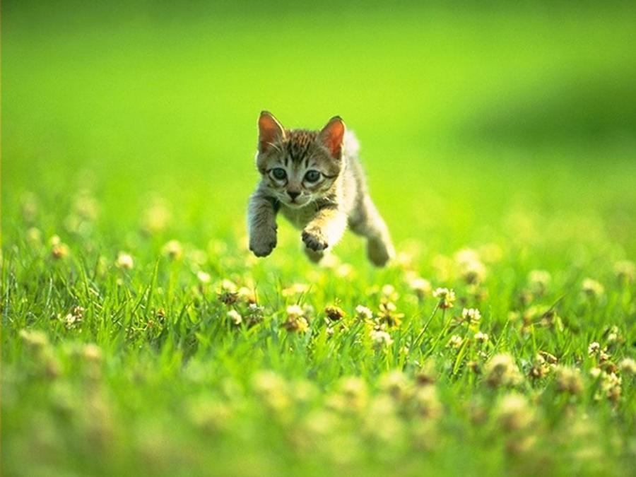 gatito-corriendo